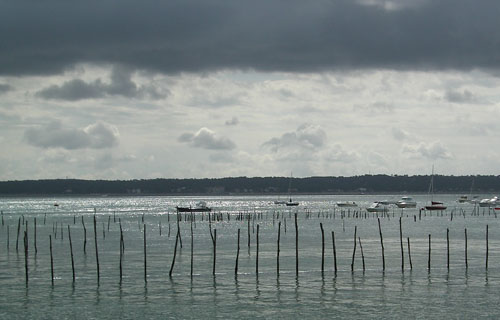 Oysters farms