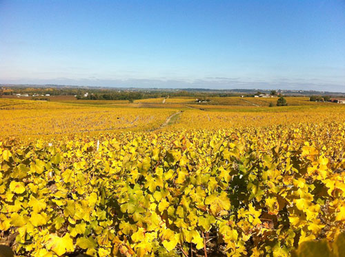 Sauternes day tour