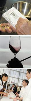Bordeaux wine road
